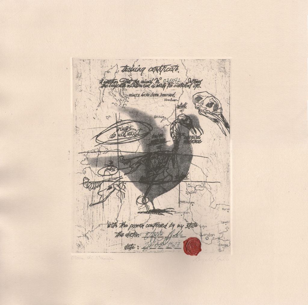 Uccello senza ali #020072